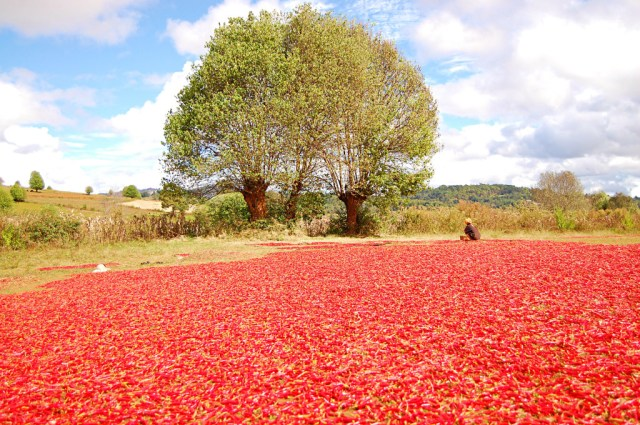 Red peppers being dried out, Kalaw to Inle Lake Trek