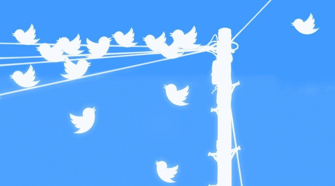 birds on a pole