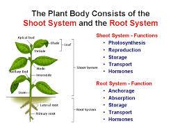 Plant Morphology