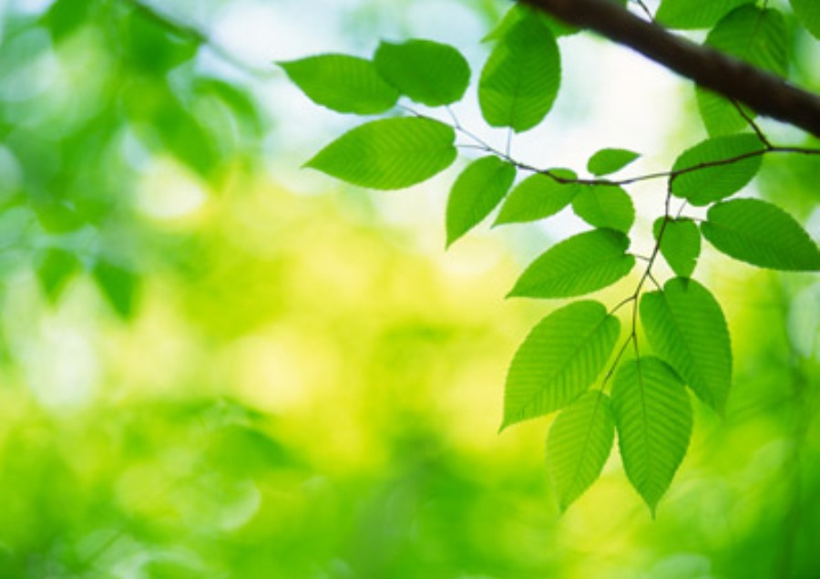evidence of photosynthesis answer key
