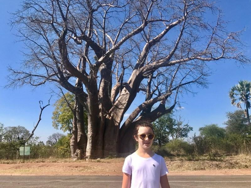 baobab tree Zambia