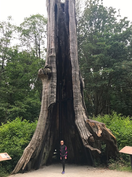 Stanley Park Hollow Tree