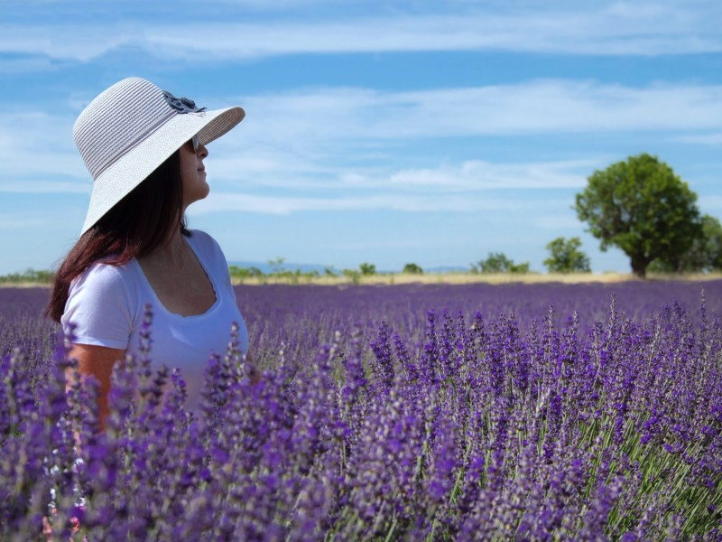 Best places in south of france Lavender fields in Aix-en-Provence