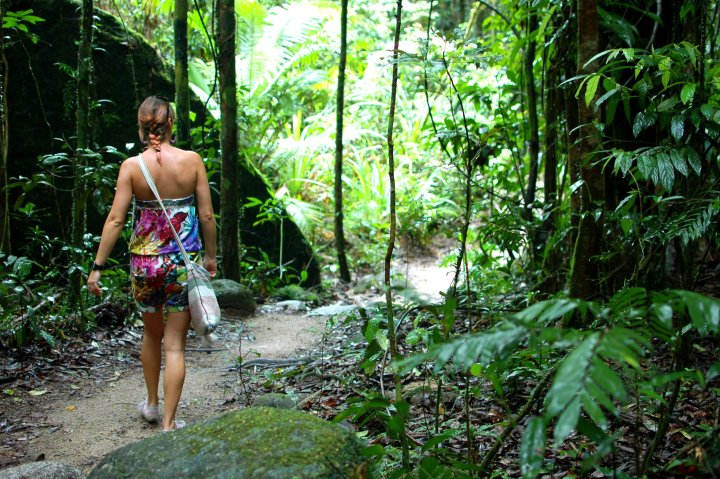 Mossman Gorge Rainforest Walk - 6 Incredible Things to do in Cairns, Queensland, Australia
