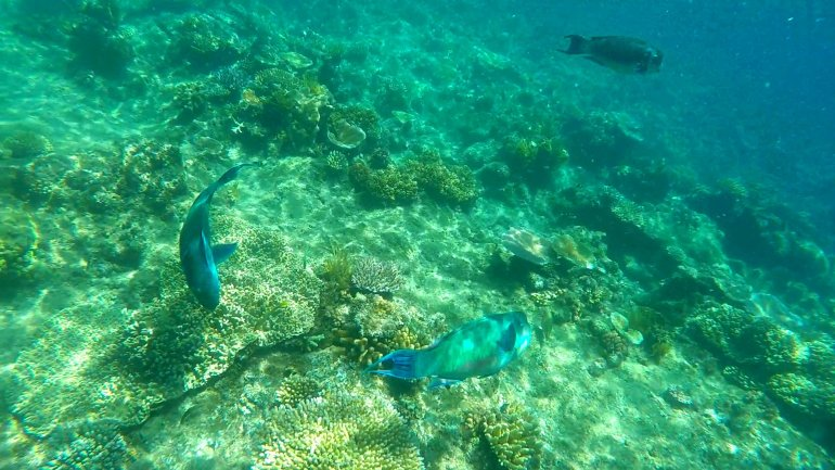 Great Barrier Reef - 6 Incredible Things to do in Cairns, Queensland, Australia