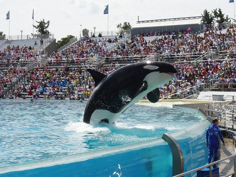 We need to talk about animal tourism! - Orca Killer Whale