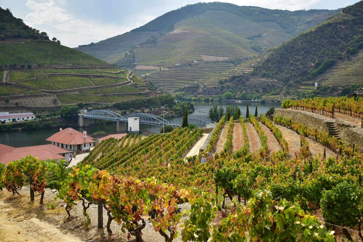 A hair-raising tipple (or, a weekend in the Douro Valley)