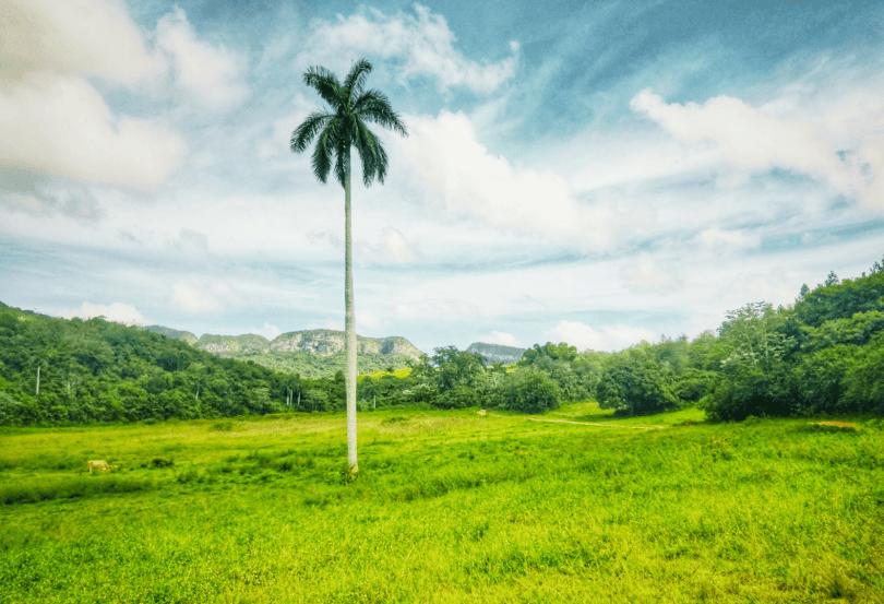 Valle de Viñales Cuba