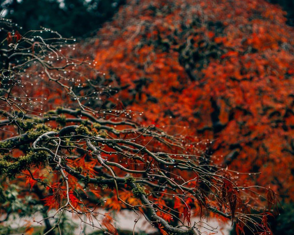 Japanese Plants in Portland
