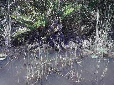 plants, Hugo Morel