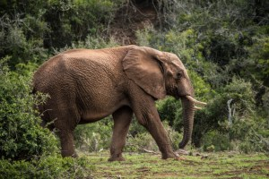 addo-elephant-national-park-7