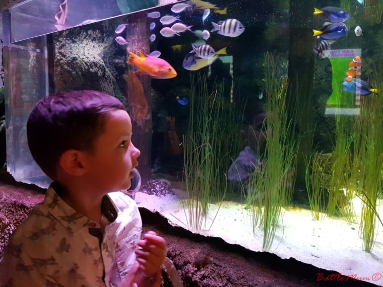 family day in london - BattleKid searching for Nemo and Dory in SeaLife