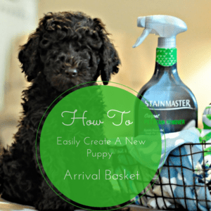 How To Easily Create A New Puppy Arrival Basket