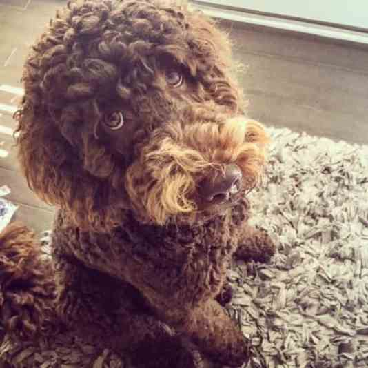 9 Excellent Reasons Why I Never Wanted A Dog