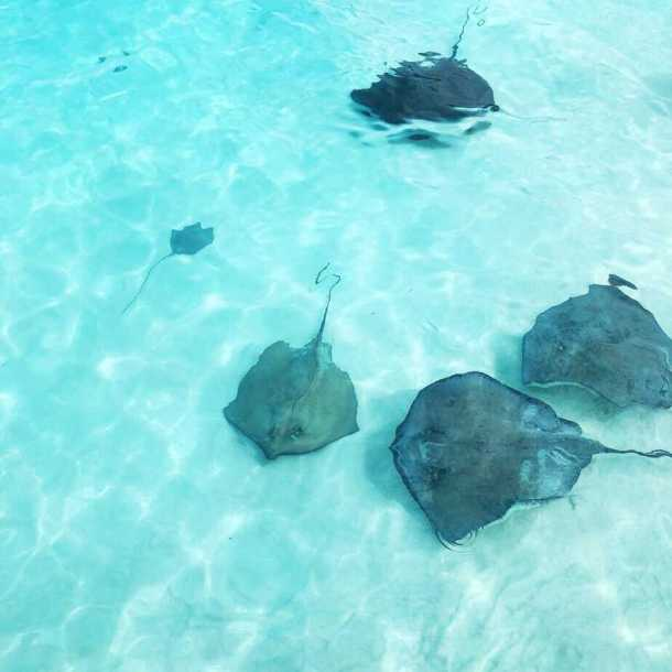 Stingray City in Cozumel