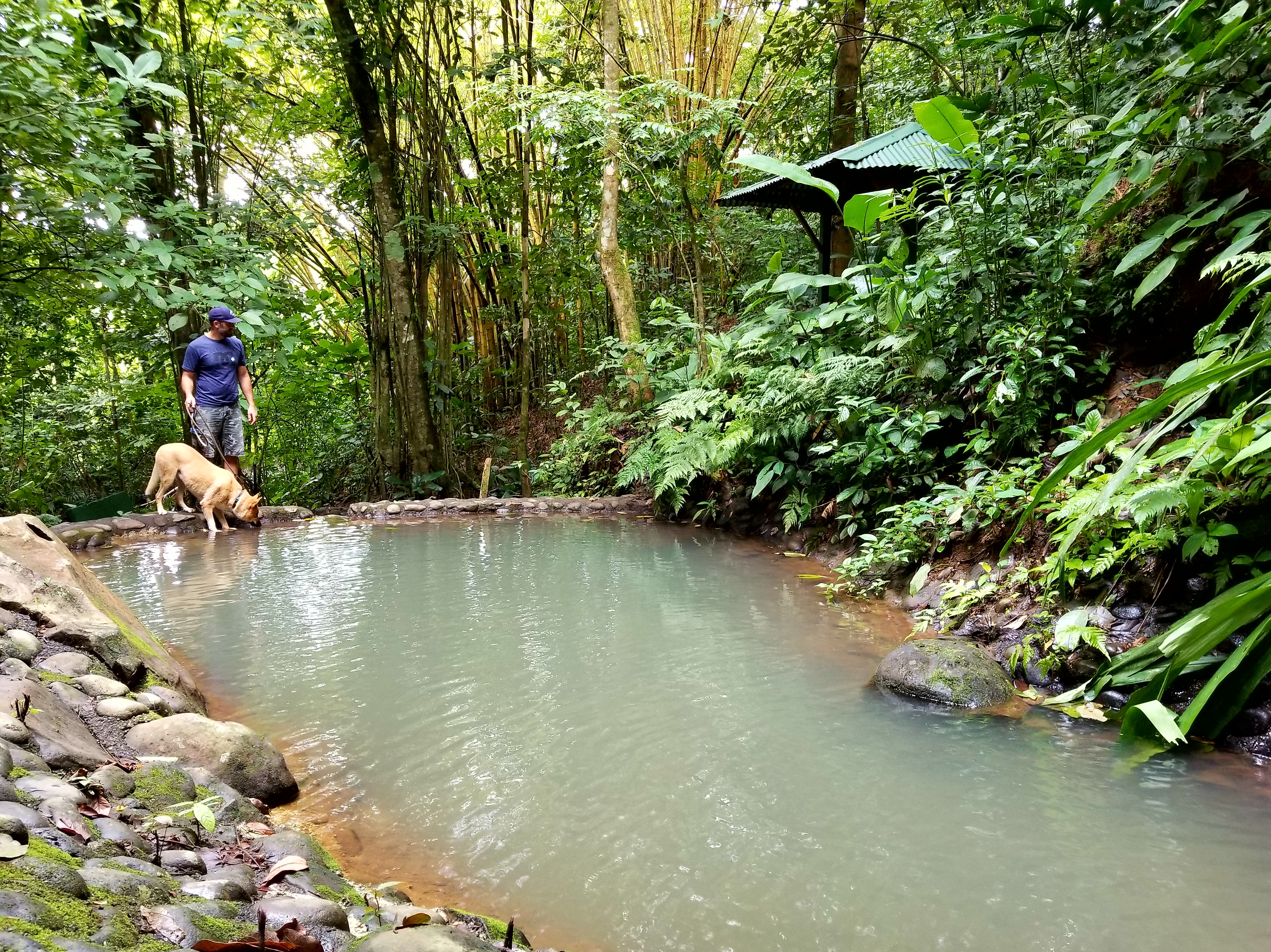 Waterfall and Dipping Pool at Treehouse Hotel, Costa Rica