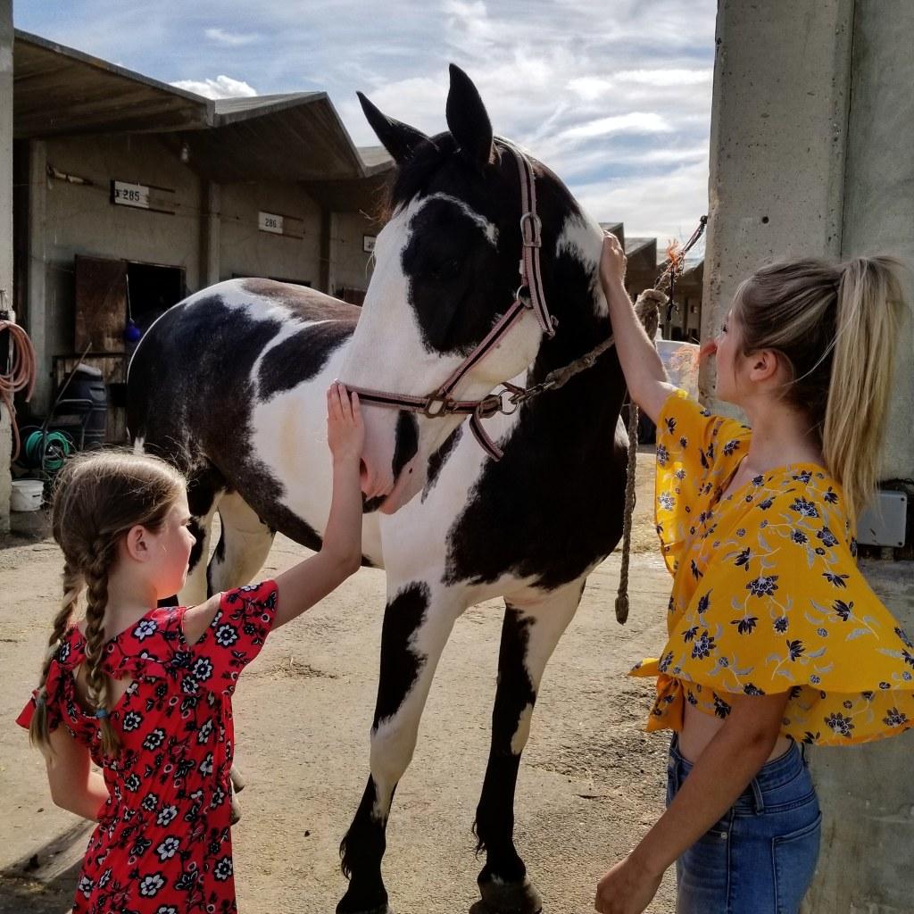 Scout, A Pony Horse, Edmonton, Alberta