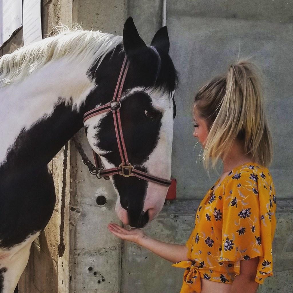 A Thoroughbred Horse experience, Edmonton