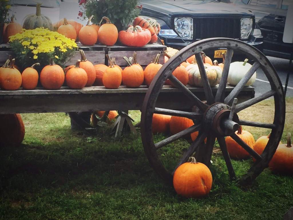 Fall, pumpkins, Halloween, apple picking banker's orchard plattsburgh ny
