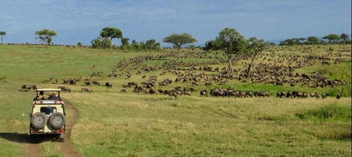 get wild in kenya or tanzania