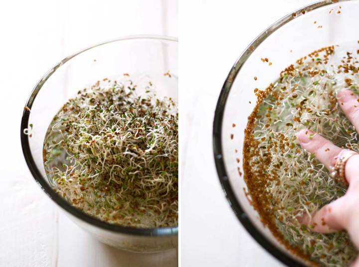 grow sprouts at home | de-hulling seeds from alfalfa sprouts in a bowl of water