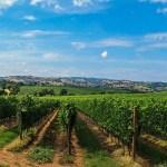 italy-toscane-wijngaard