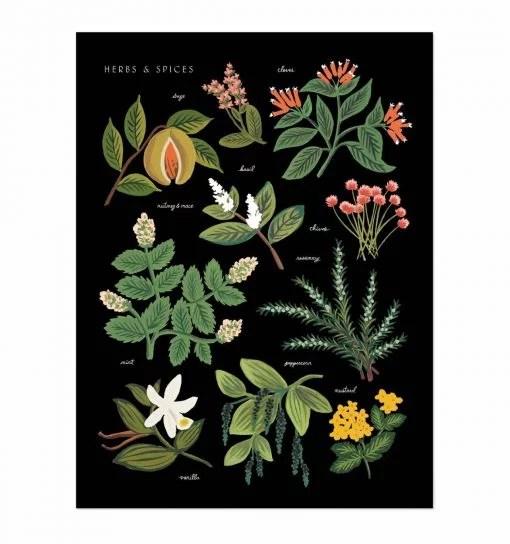 Affiche Herbes et épices Rifle Paper Noire