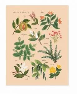 Affiche Herbes et épices Rifle Paper pêche