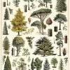 Affiche Arbre de la Forêt Cavallini