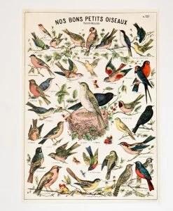 Affiche Oiseaux Cavallini