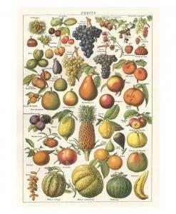 Affiche pédagogique Fruits Cavallini