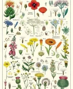 Affiche Fleurs sauvages Cavallini