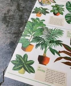 Affiche House plants Cavallini