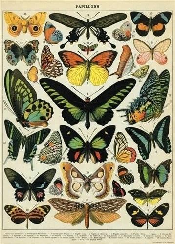 Affiche vintage papillons Cavallini