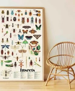 Poster géant + 44 stickers – Insectes (6-12 ans)