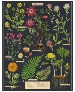 Puzzle Herbarium 1000 pièces Cavallini