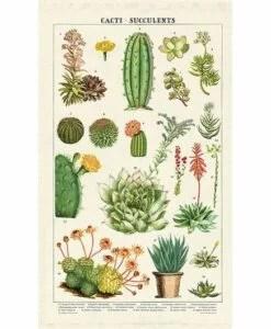 Torchon de cuisine Cactus et succulentes