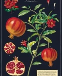 Affiche pédagogique Grenade Cavallini