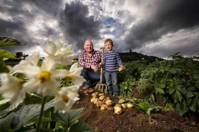 Comber Potatoes Iconic Local Brands