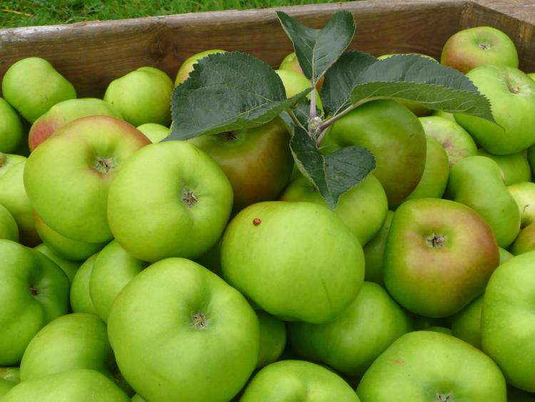Richhill Apple Harvest Fayre