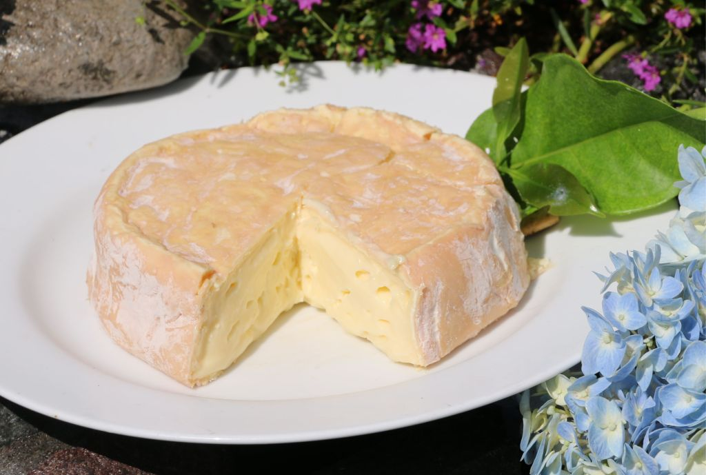 Matahari Cheese Picture