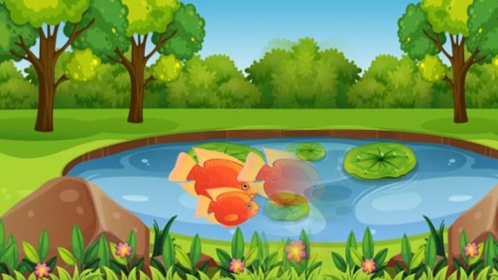 Cara Budidaya Ikan Nila Secara Sederhana