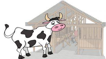 Langkah Untuk Memulai Ternak Sapi