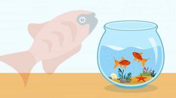 Cara Budidaya Ikan Molly Dengan Mudah