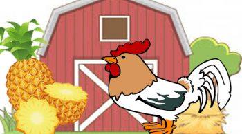 Manfaat Limbah Nanas Untuk Pakan Ayam