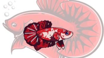 Tips Memilih Ikan Cupang Yang Berkualitas