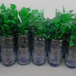 Budidaya Tanaman Dengan Teknik Hidroponik Botol Bekas