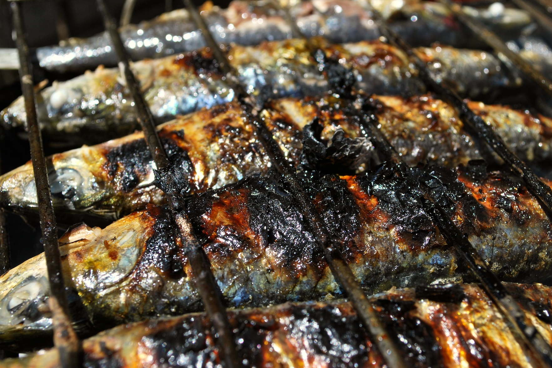 Sardines grilling on charcoal