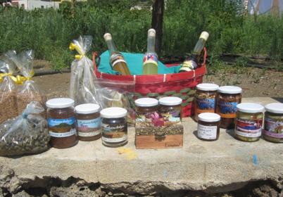 prodotti-linosa-errea