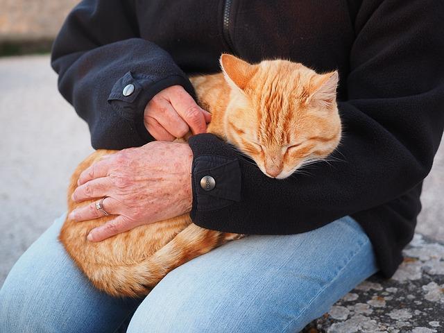 Les chats seraient capables de détecter un cancer !